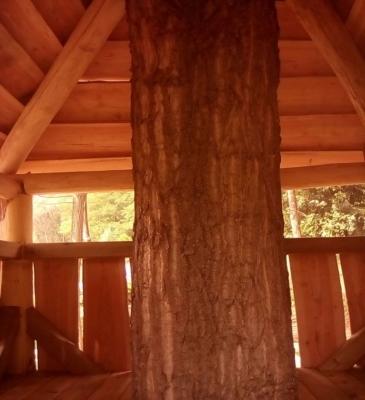 Case sull'albero 1